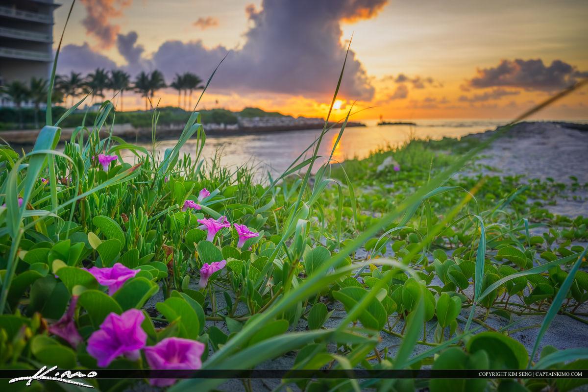 Pink Flower at Sunrise Boca Raton Inlet