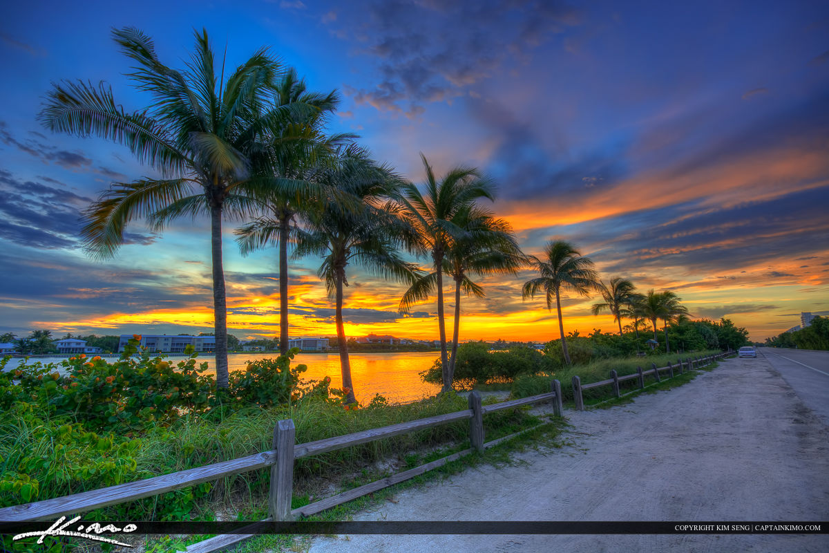 Coconut Trees along Waterway on Jupiter Island at Sunset