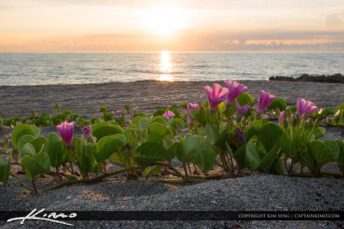 Flowers on Florida Beach