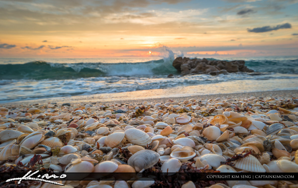 Seashell at Beach with Ocean Wave