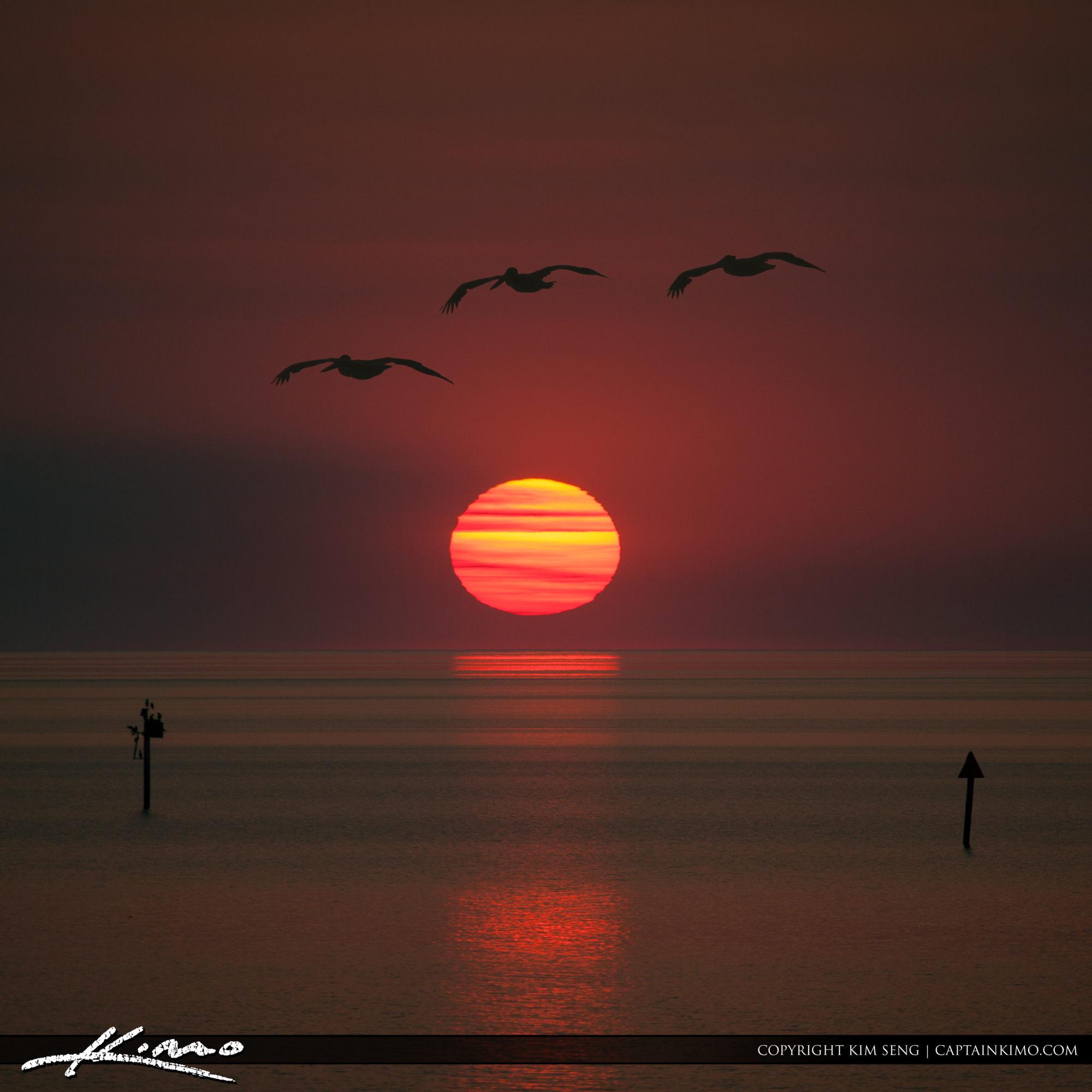 Lake Okeechobee Sunset Pelicans Flying Square