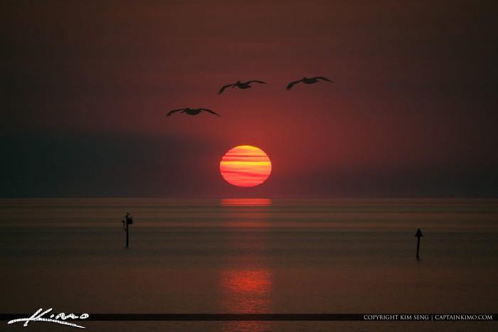 Lake Okeechobee Sunset Pelicans Flying