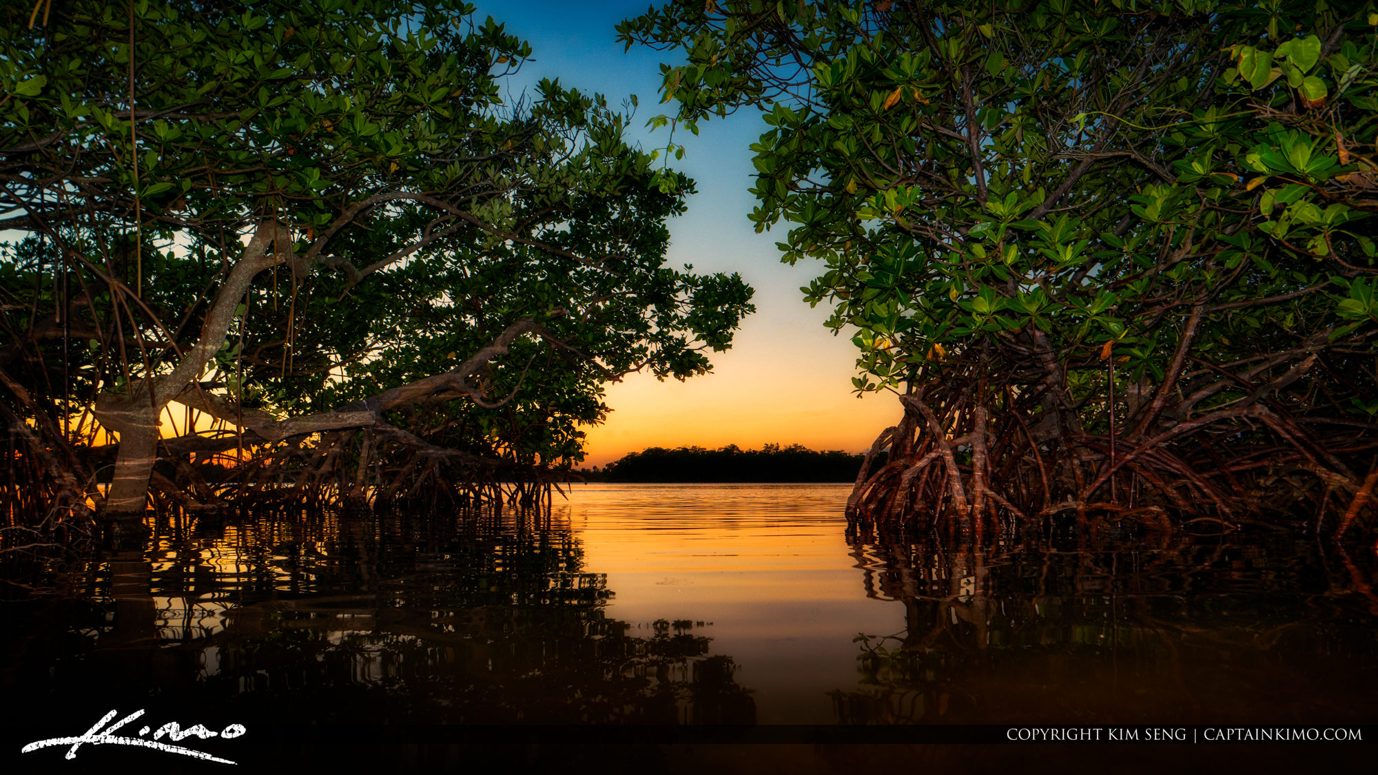 Red Mangroves Lake Worth Lagoon
