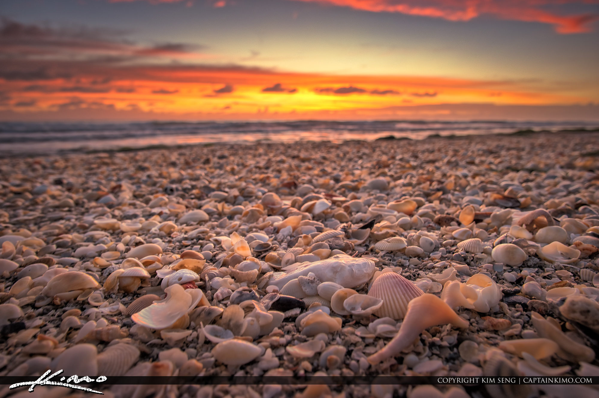 Seashells at the Beach Pink Sunrise