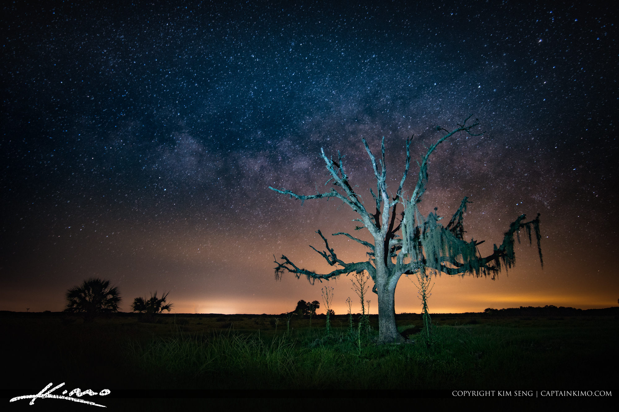 Spooky Tree at Blue Cypress Conservation Area Under the Stars