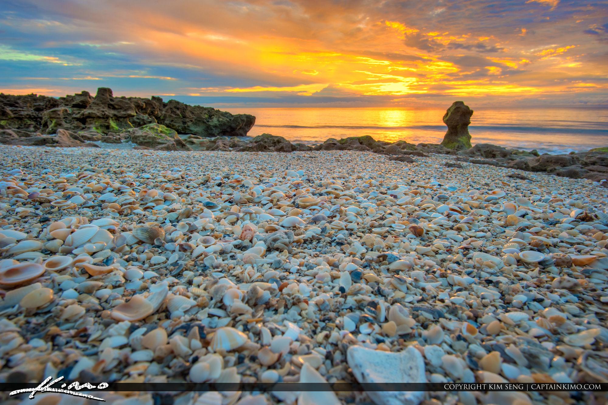 Seashells at the Beach on Jupiter Island South Florida
