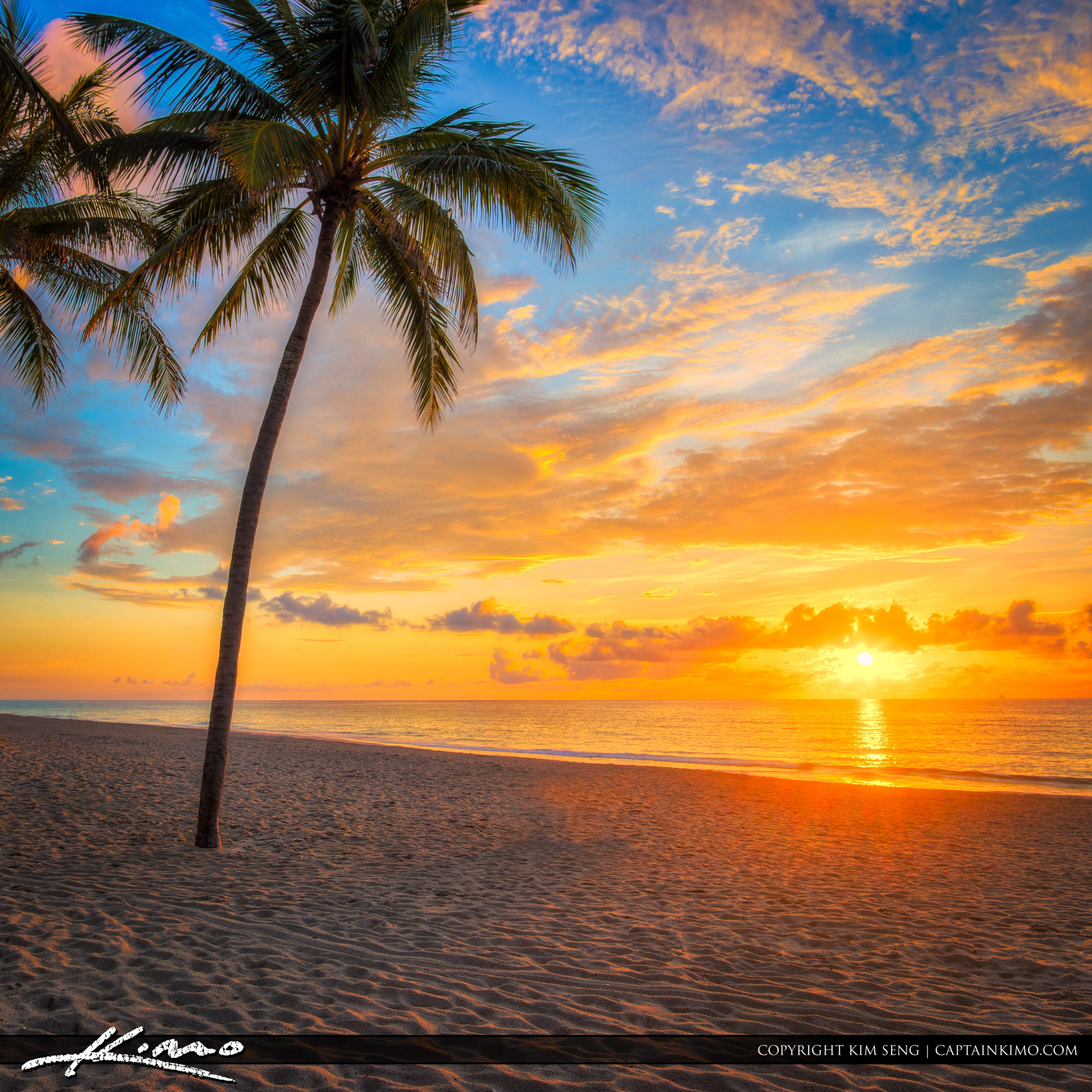 Hollywood Beach Sunrise Coconut Tree on Beach with Blast of Colo