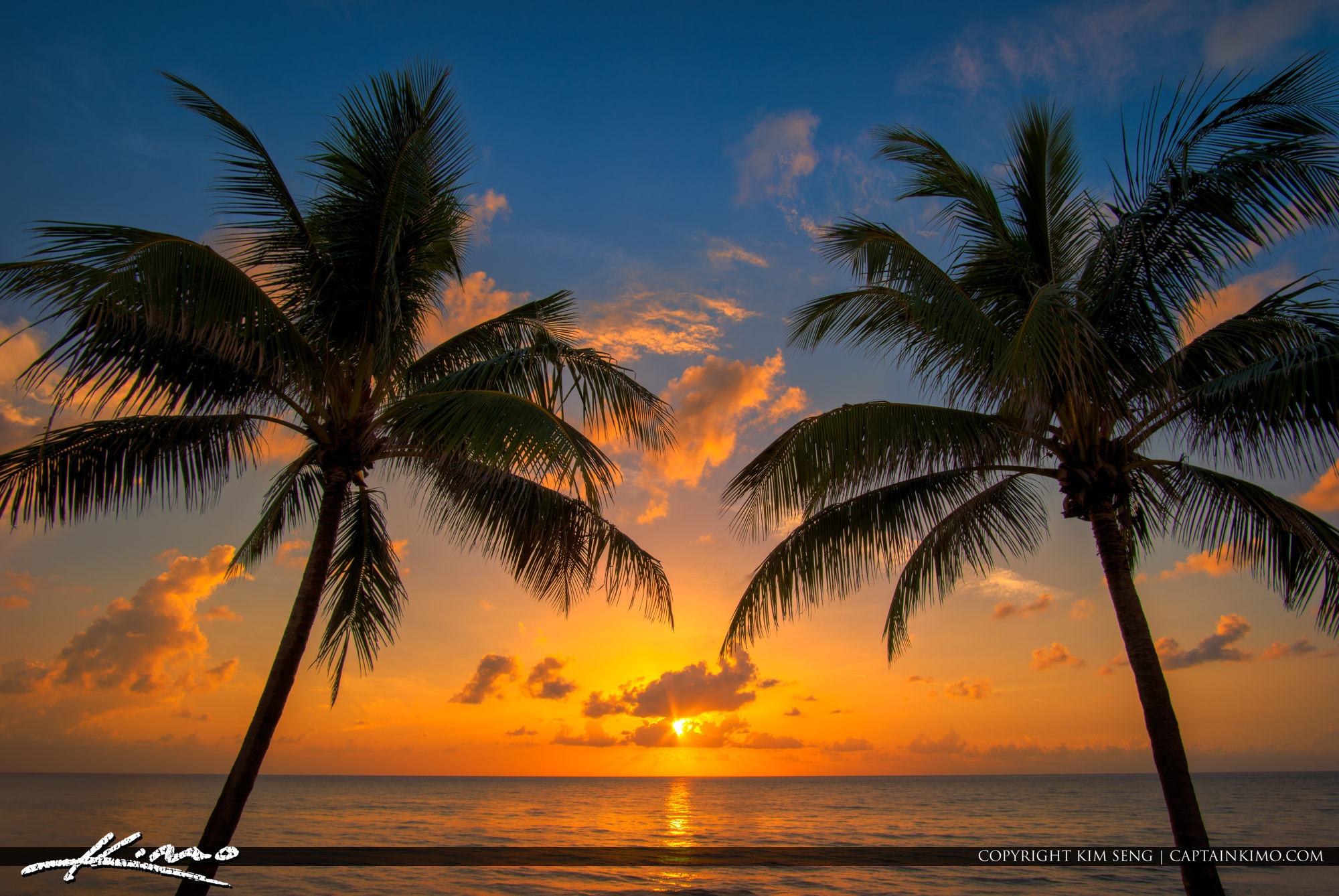 Coconut Tree Sunrise at the Beach