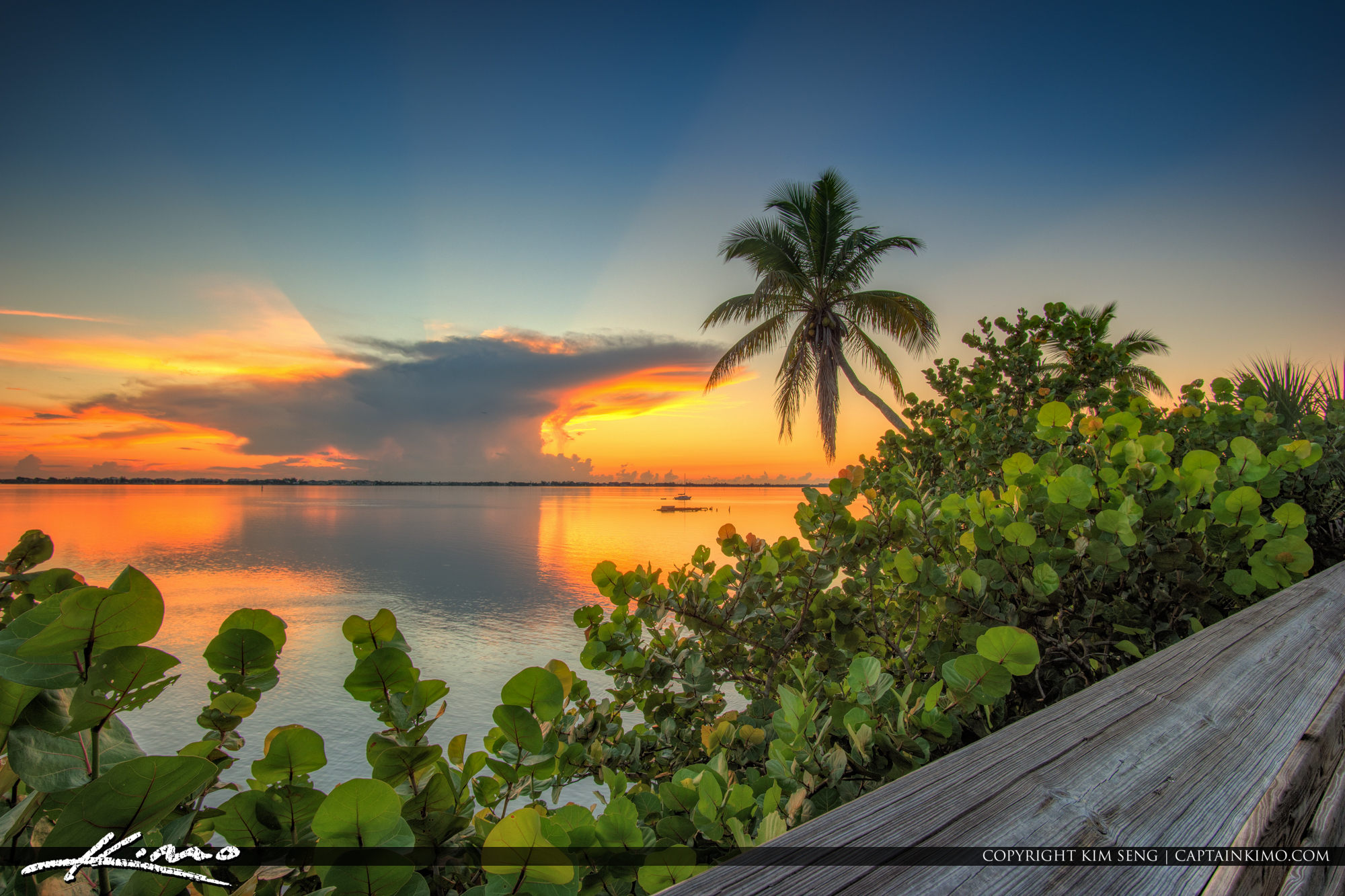 Sunrise Indian Riverside Park Coconut Tree