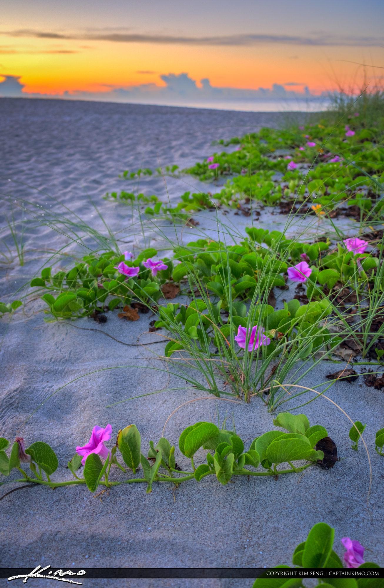 Flowers at the Boca RatonInlet Beach Park