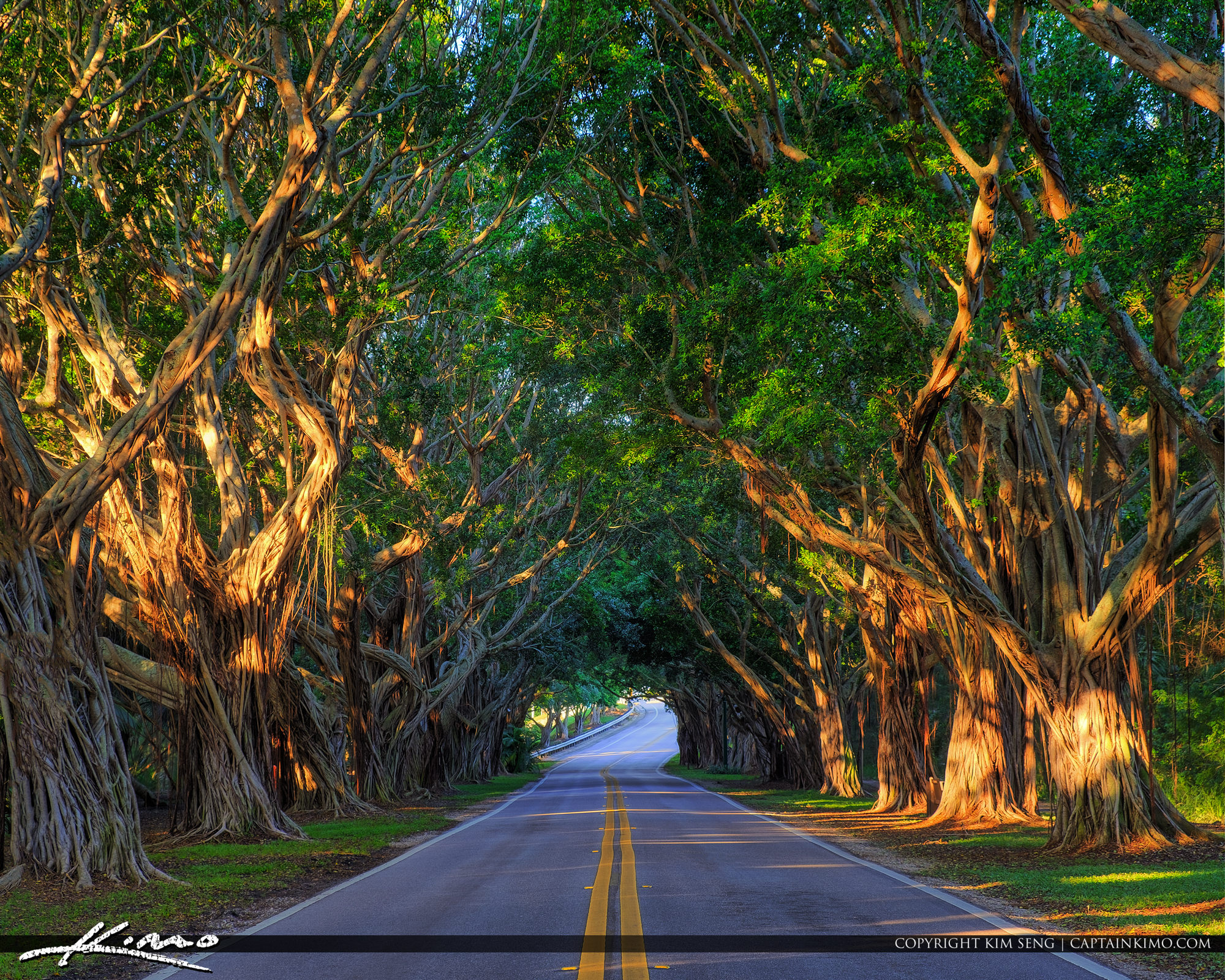 Bridge Road Under the Trees Hobe Sound Florida