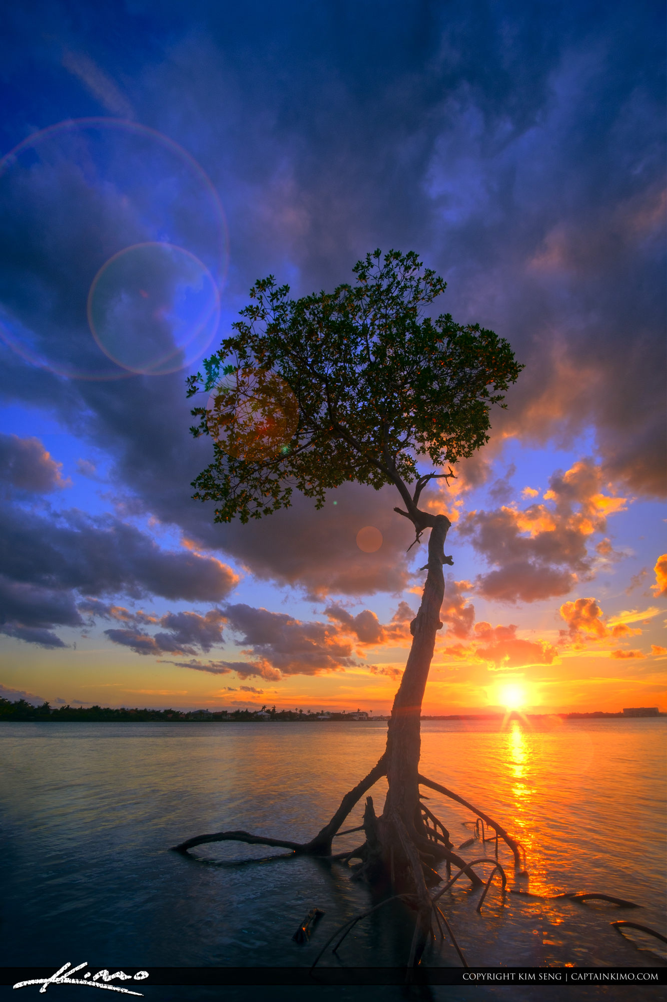 South Florida Sunset with Mangrove Tree