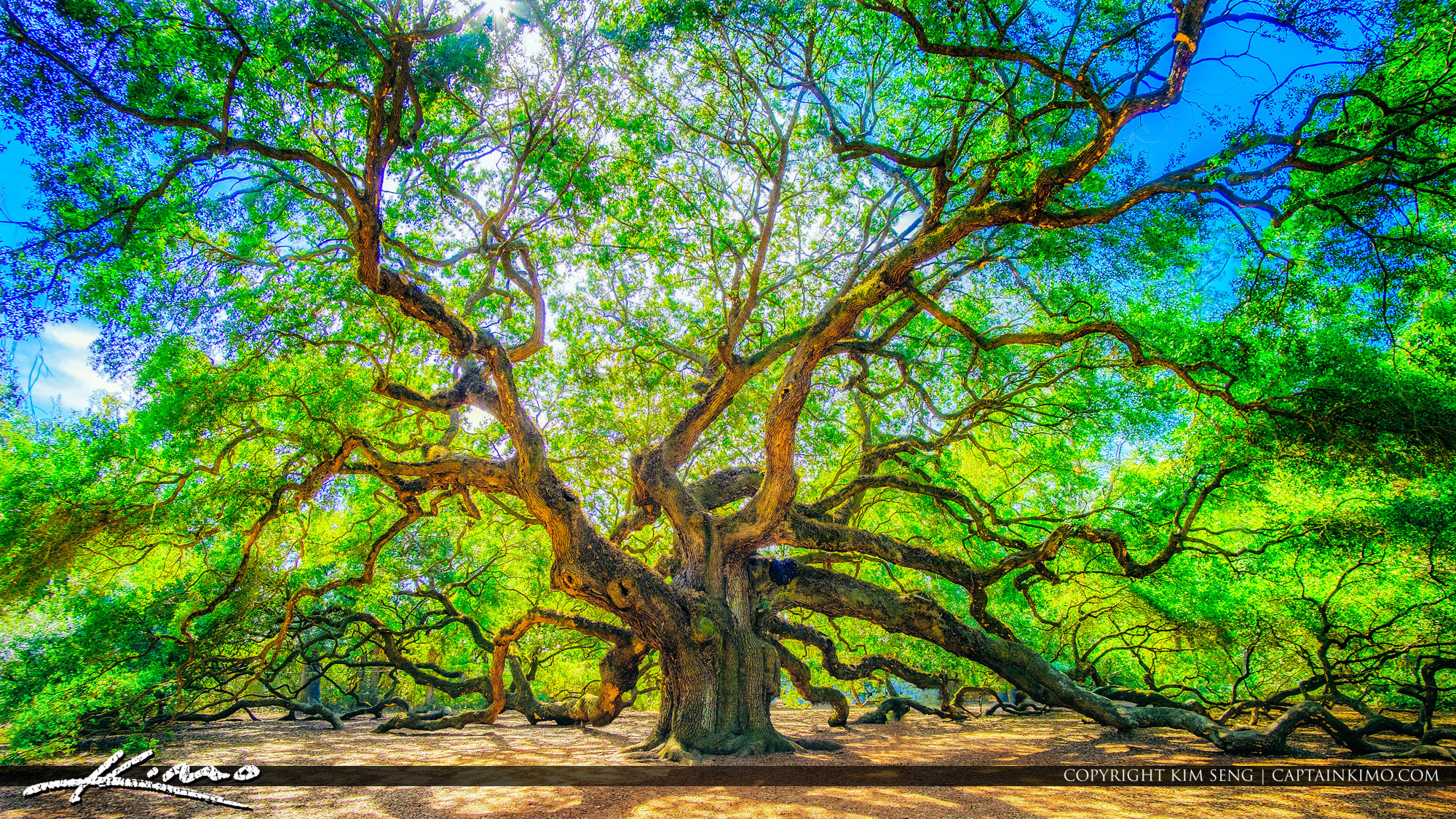 Legendary Angel Oak Tree in South Carolina