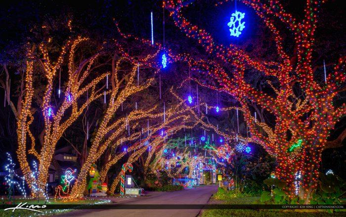 Lights on Oak Tree