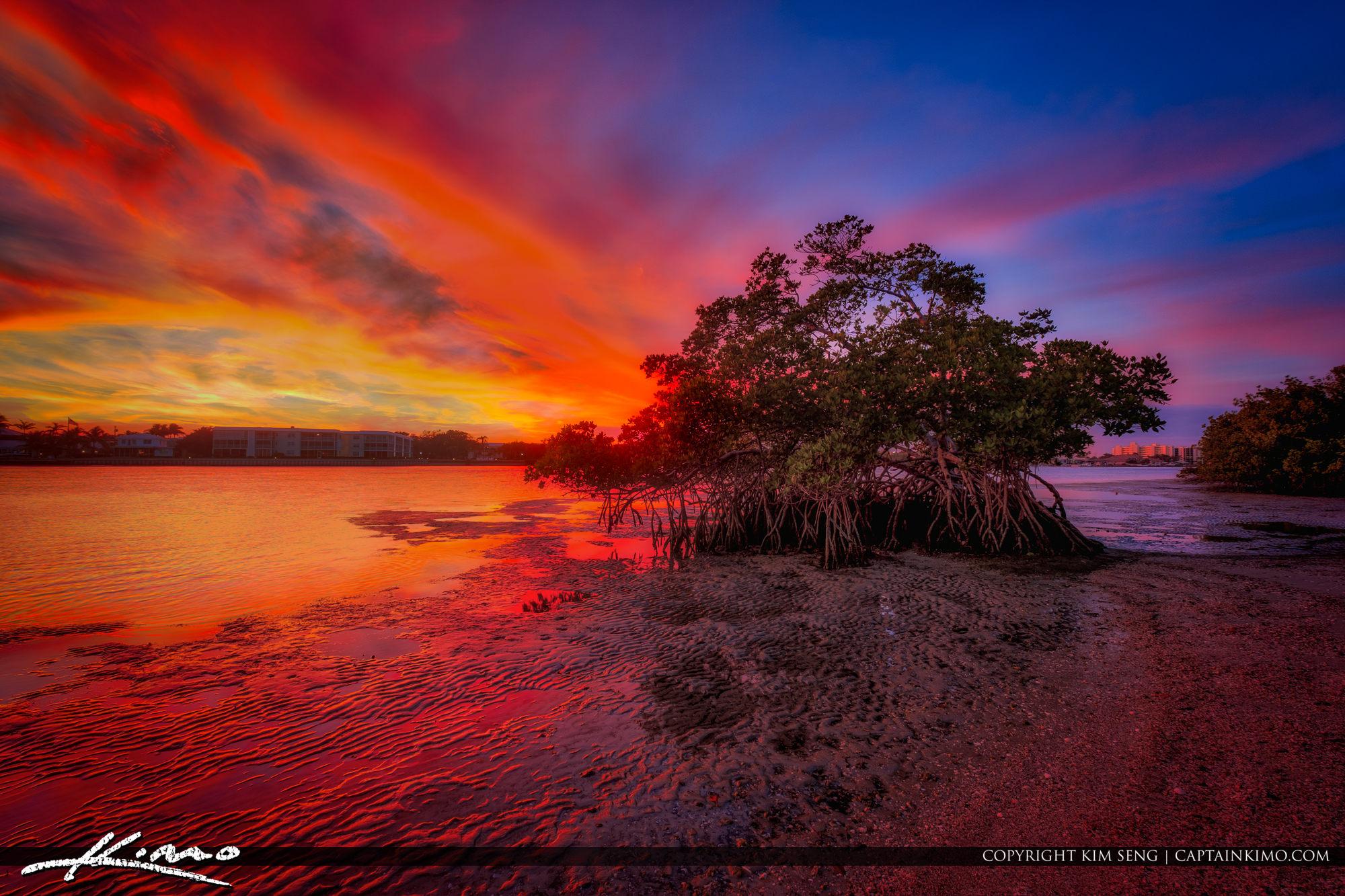 Mangrove Tree Sunset Waterway Loxahatchee River