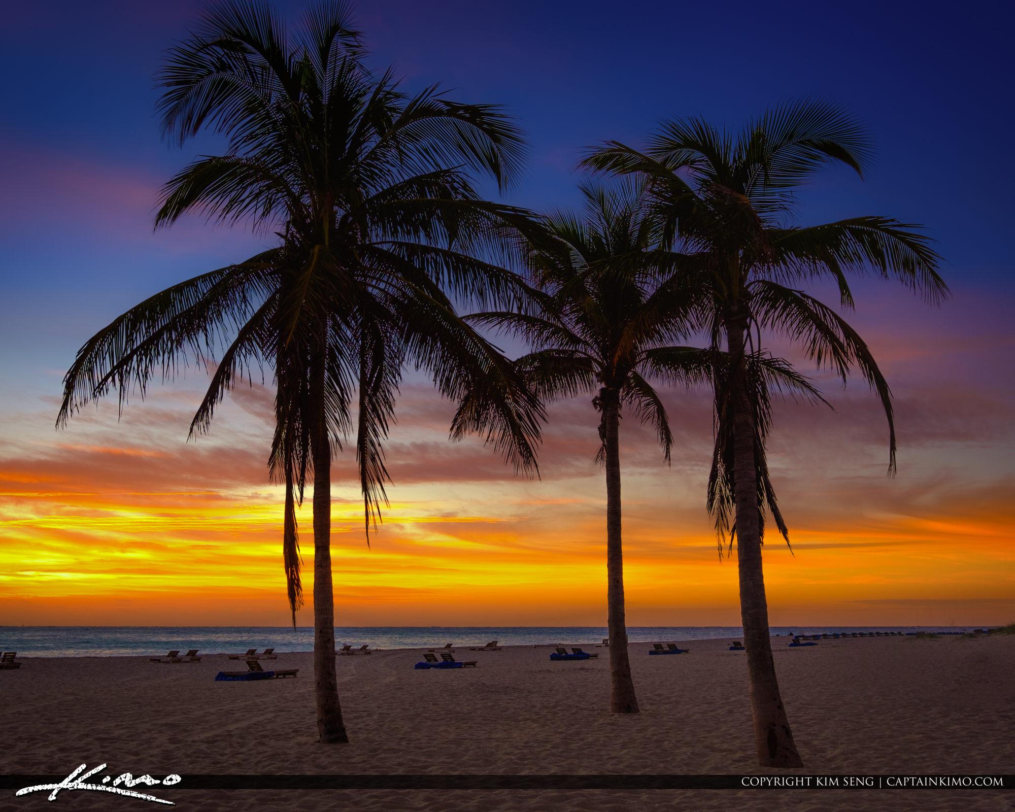 Coconut Tree at Singer Island Beach in Rvieira Beach Florida Squ