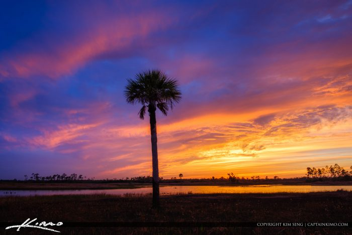 Pine Glades Natural Area Sunset Over Wetlands