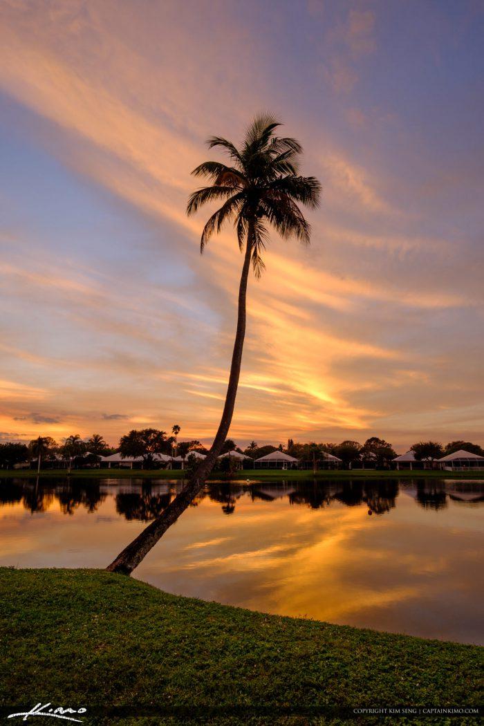 Lake Catherine Coconut Tree Down Before Hurricane Irma