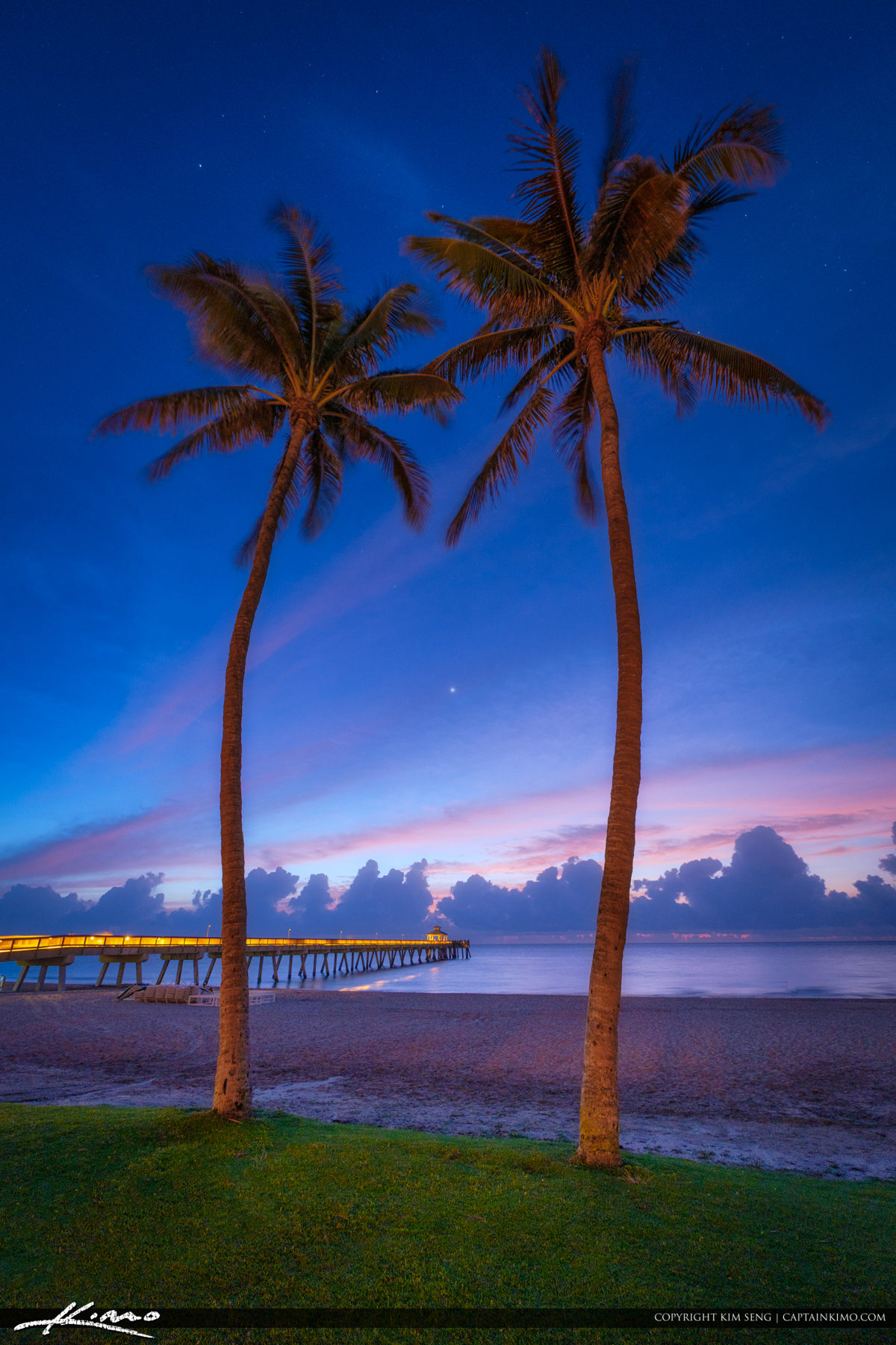 Early Morning at Deerfield Beach Fishing Pier Coconut Tree