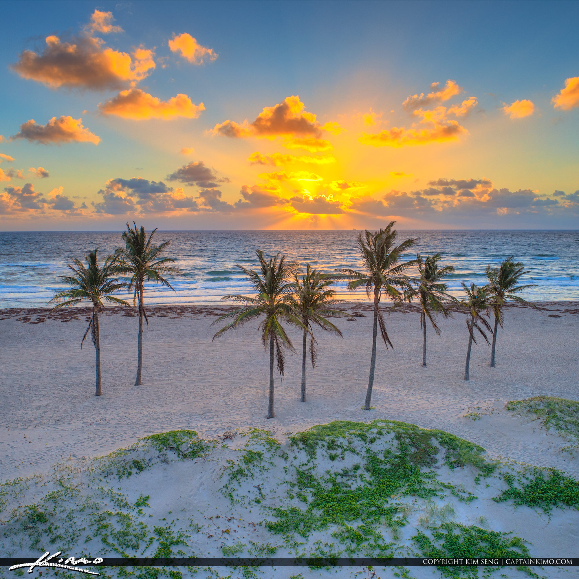 Singer Island Aerial Sunrise Coconut Tree The Palm Beaches