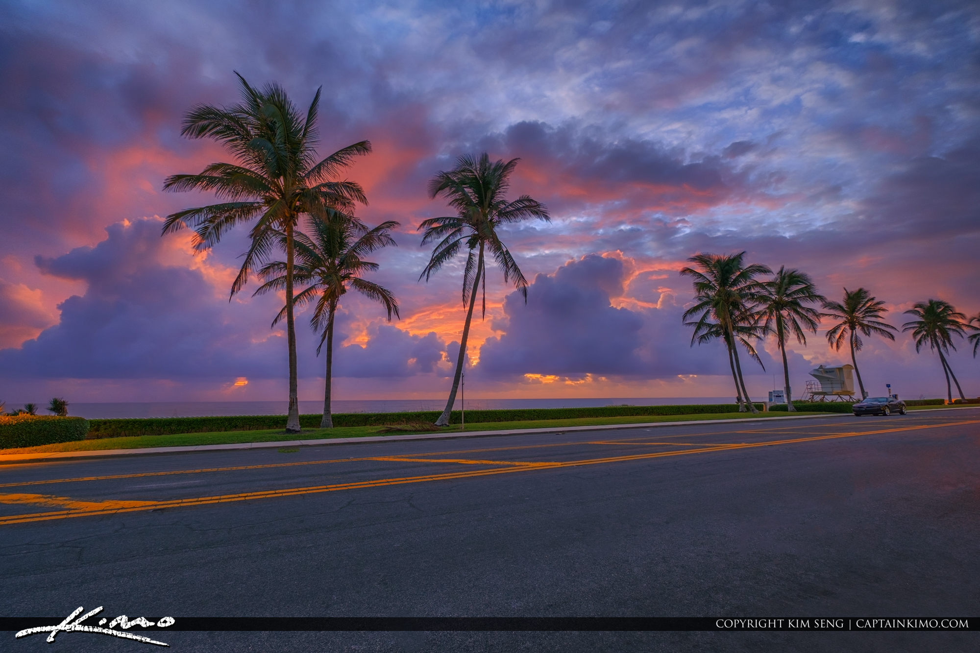 Coconut Tree at Ocean Blvd Palm Beach Island Sunrise