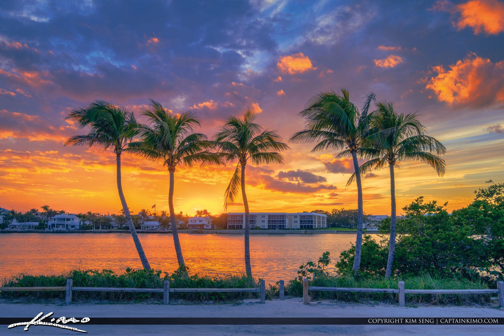Five Coconut Tree Sunset Jupiter Island Florida