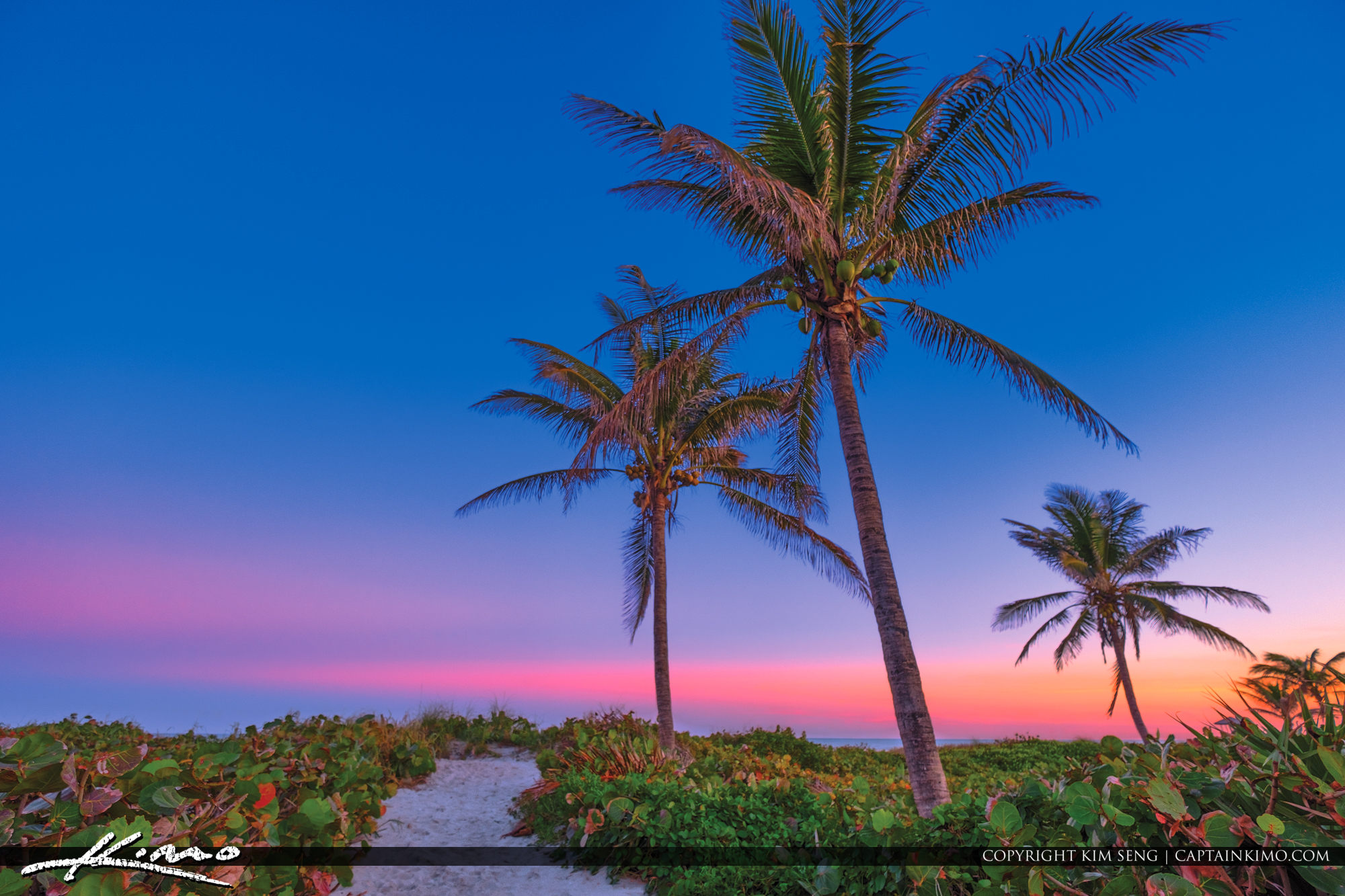 Delray Beach Coconut Tree and Sky Colors at Beach