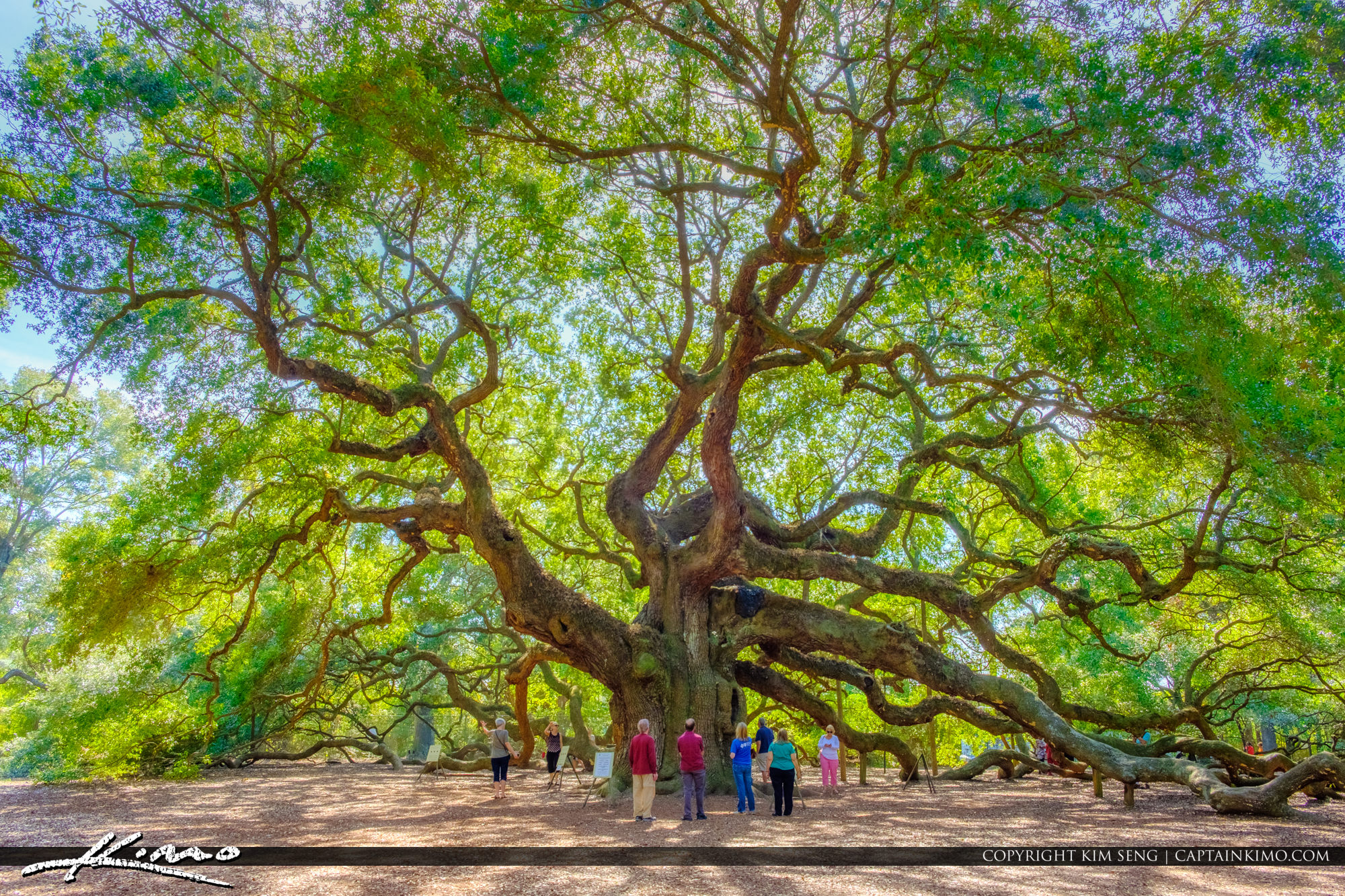 South Carolina Angel Oak Tree People at Trunk