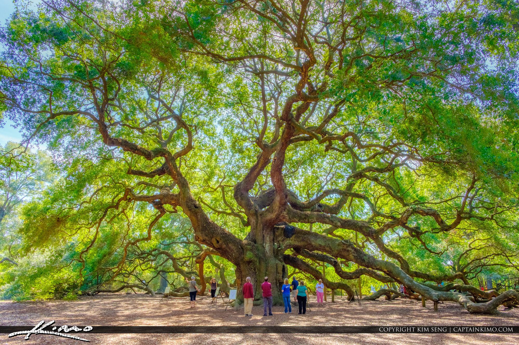 South Carolina Angel Oak Tree People at Trunk
