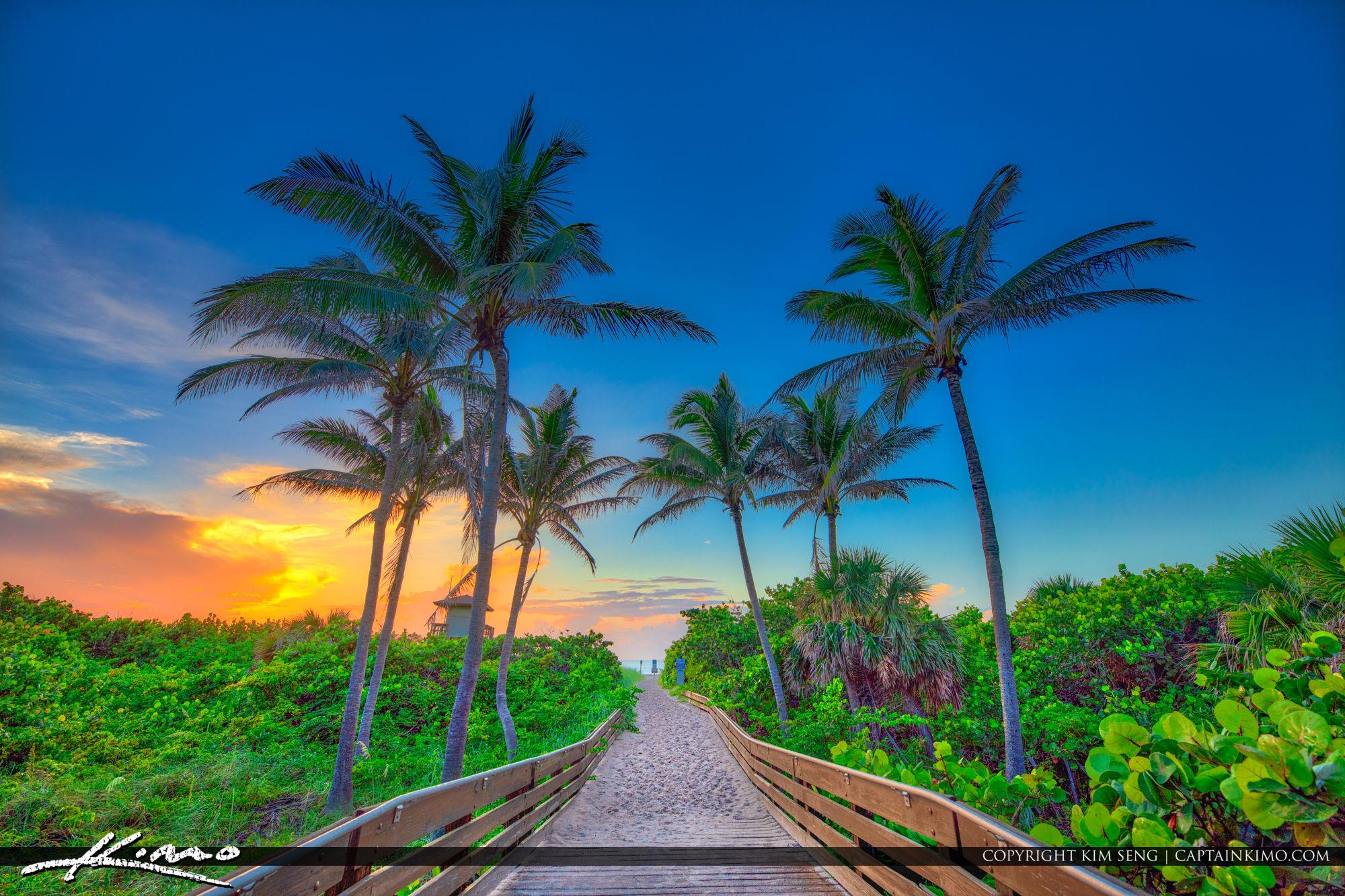 Coconut Tree Ocean Reef Park Singer Island Florida