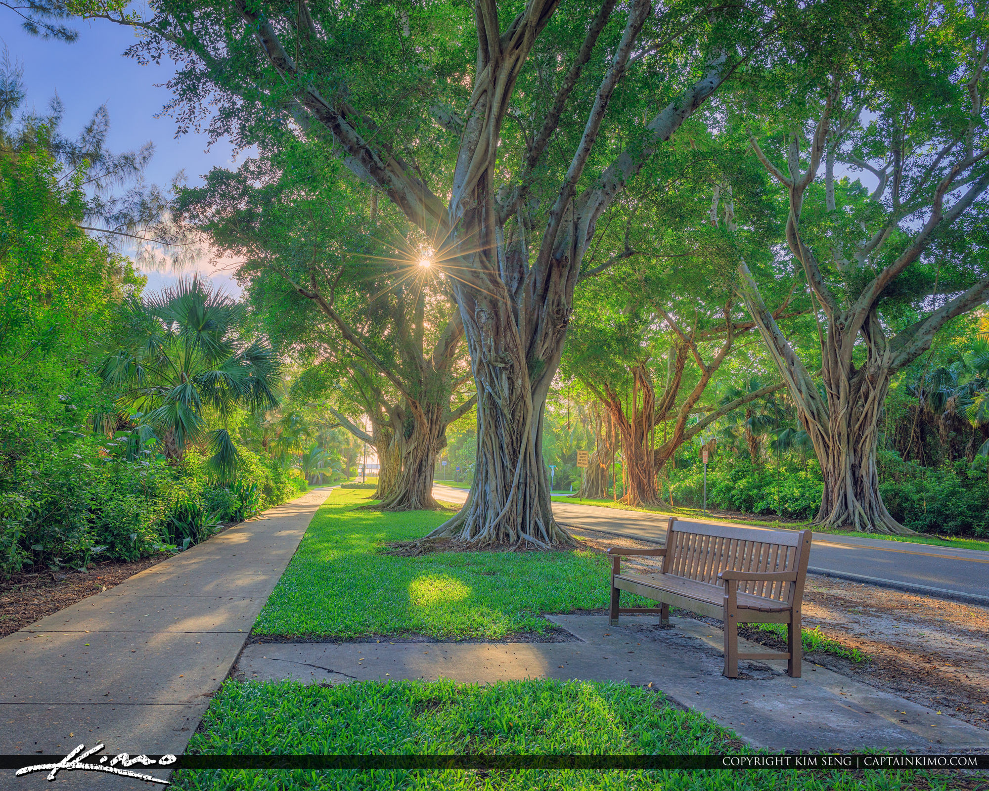 Bridge Road Hobe Sound Tree Canopy Sidewalk Bench