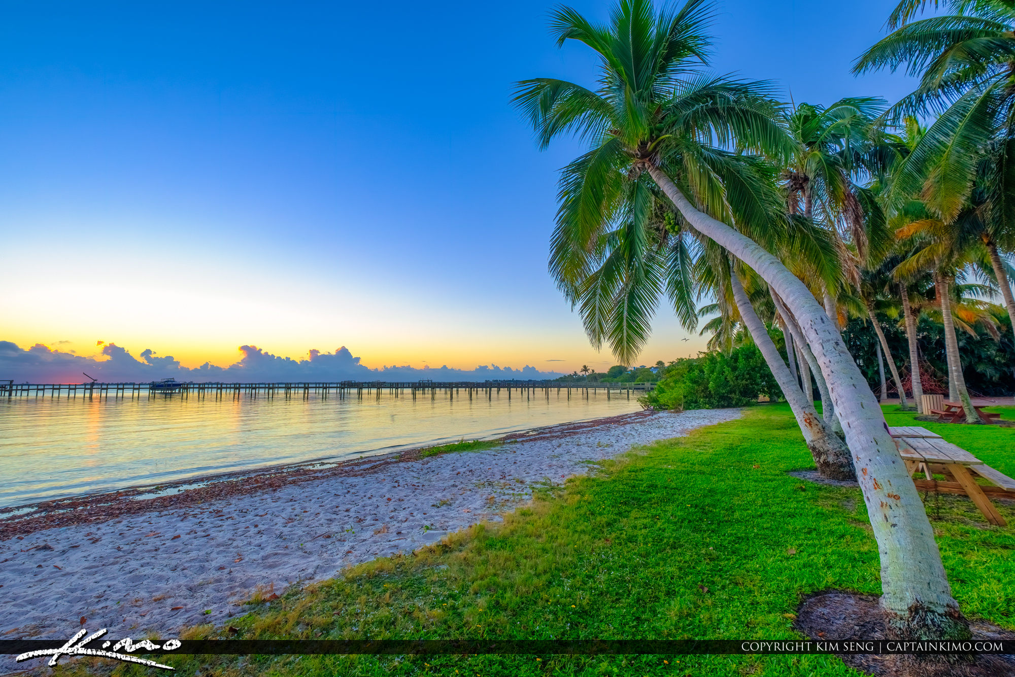 Sewalls Point Park Martin County Florida Sunrise Coconut Tree