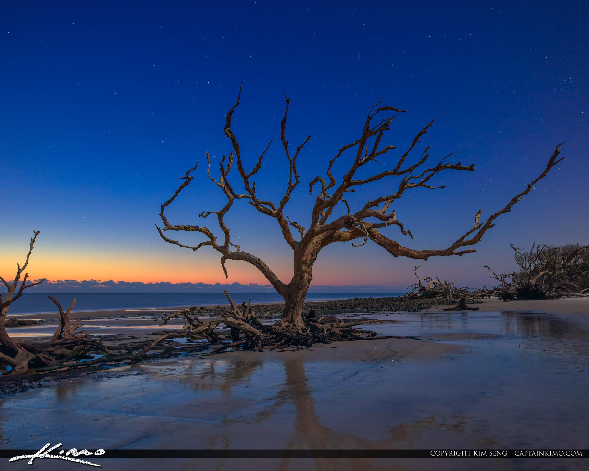 Driftwood Beach Jekyll Island Georgia Golden Isles
