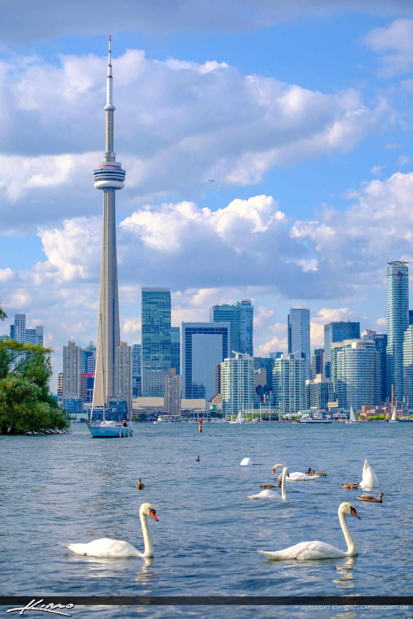 White Swam CN Tower Skyline Centre Island Toronto Ontario Canada