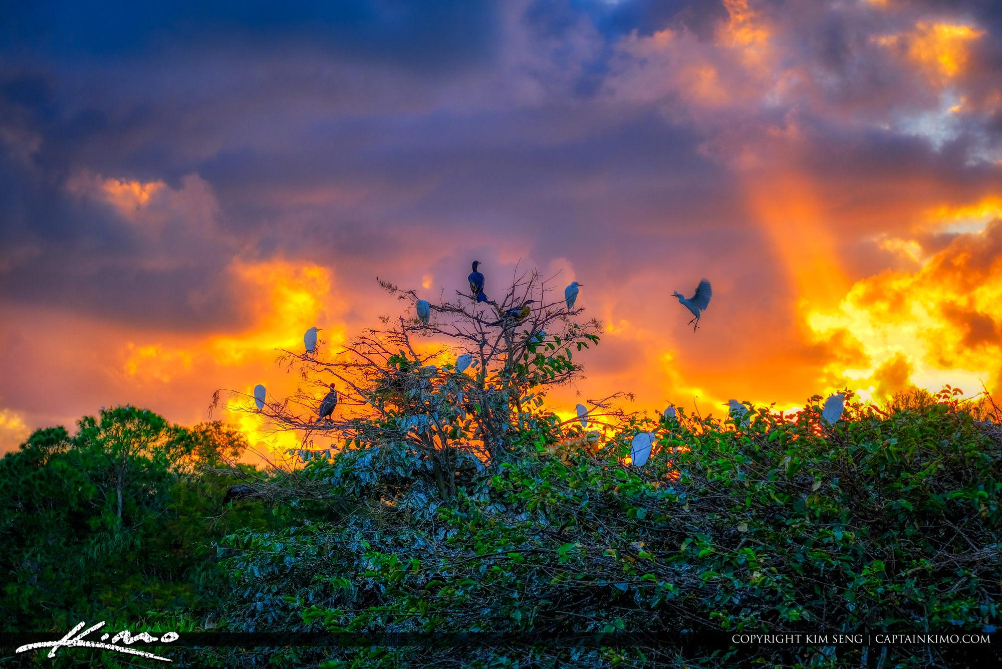 Bird Roosting at Wakodahatchee Delray Beach
