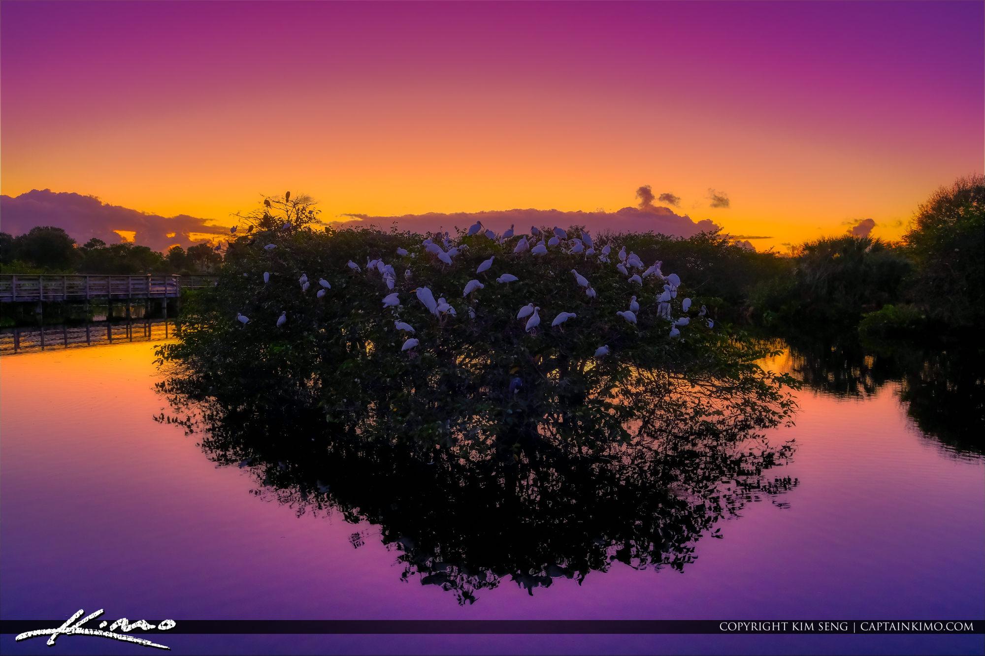 Delray Beach Florida Bird Roosting