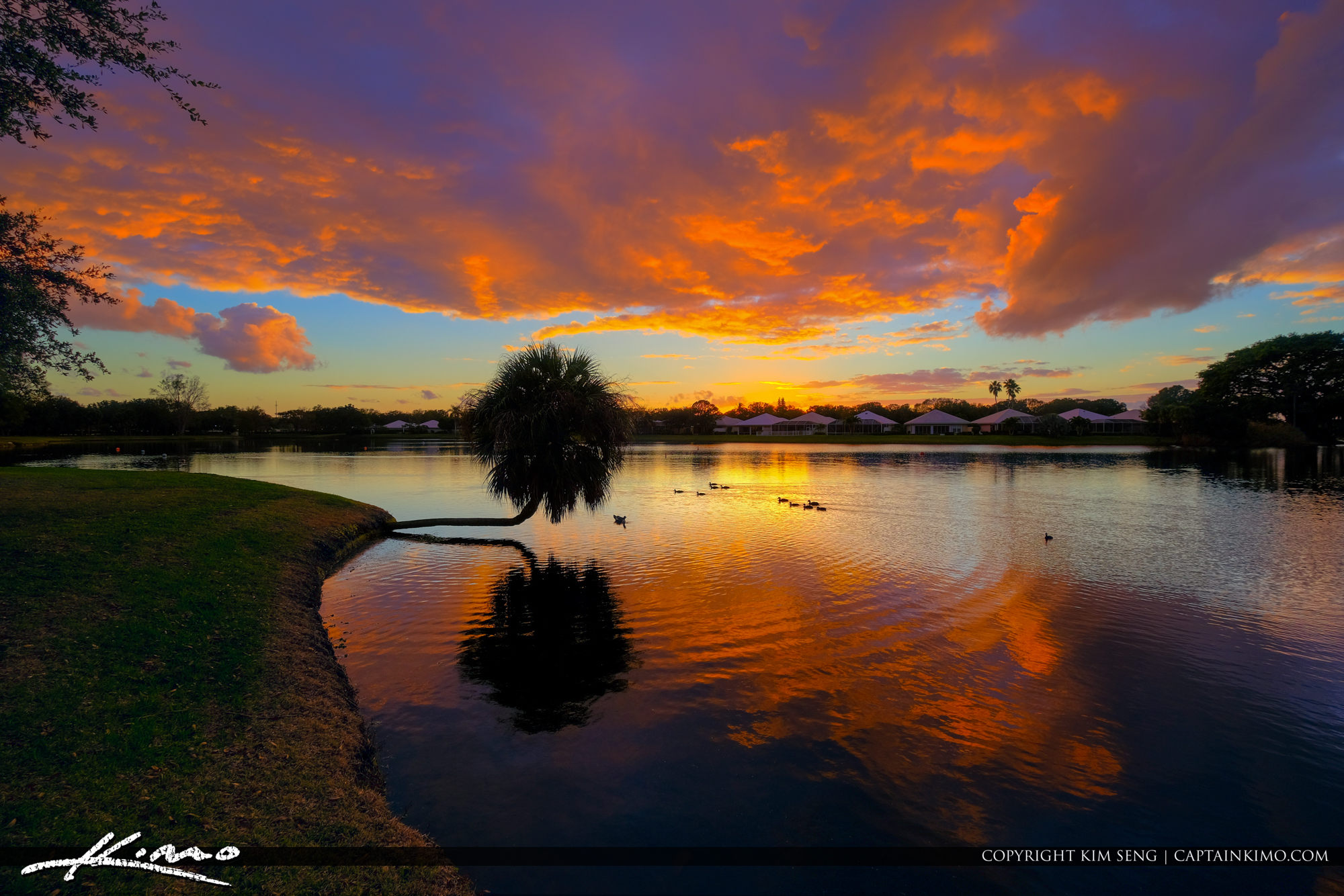 Sunset Over Lake in Palm Beach Gardens Florida Palm Tree