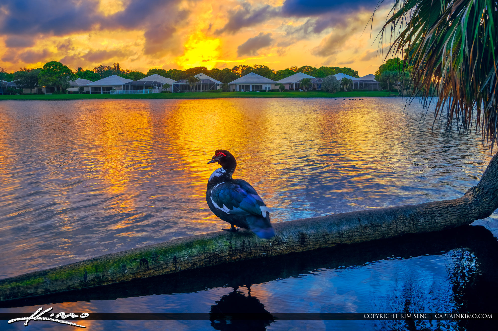 Duck at Lake Catherine Palm Beach Gardens Florida Sunset Colors