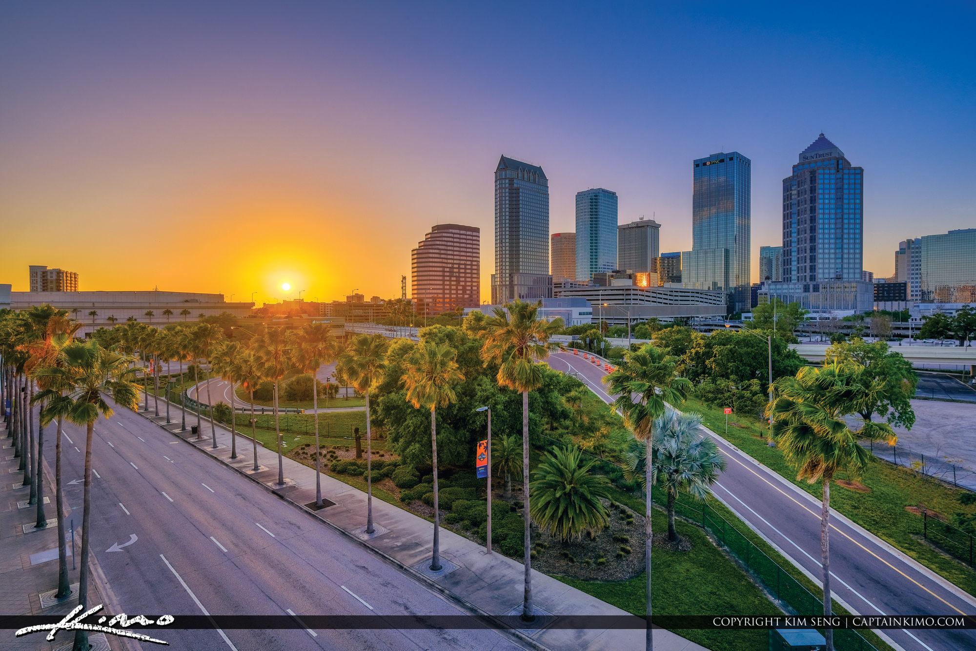 Tampa Skyline Sunset Through Palm Tree