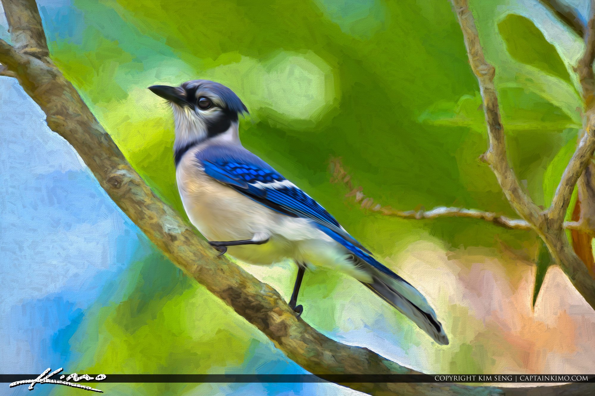 Blue Jay Bird Photo Art