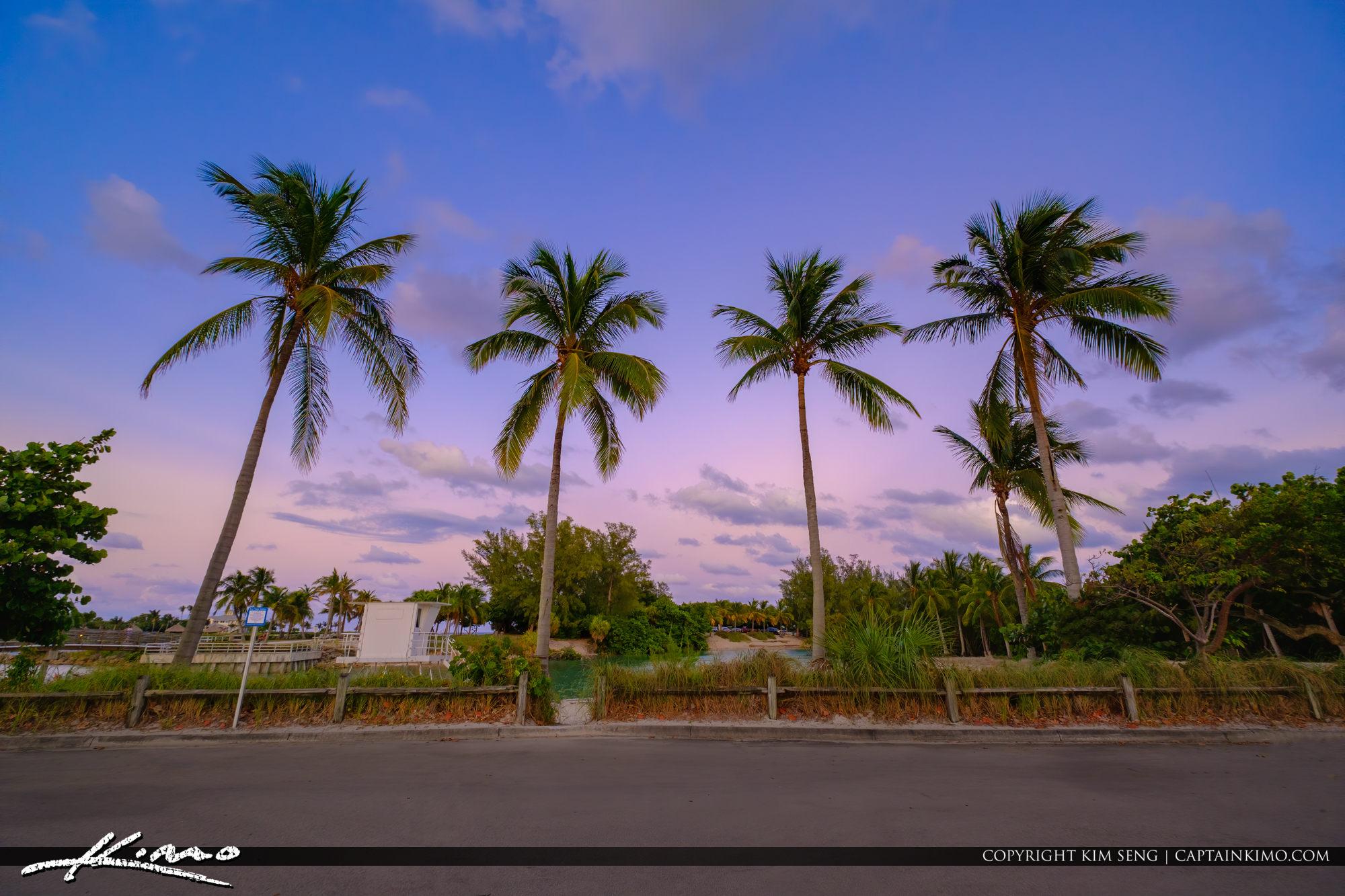 Jupiter Beach Coconut Trees
