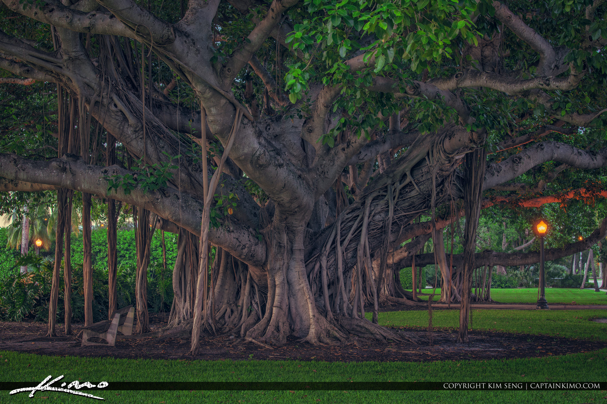 Beautiful Banyan Trees Palm Beach Island