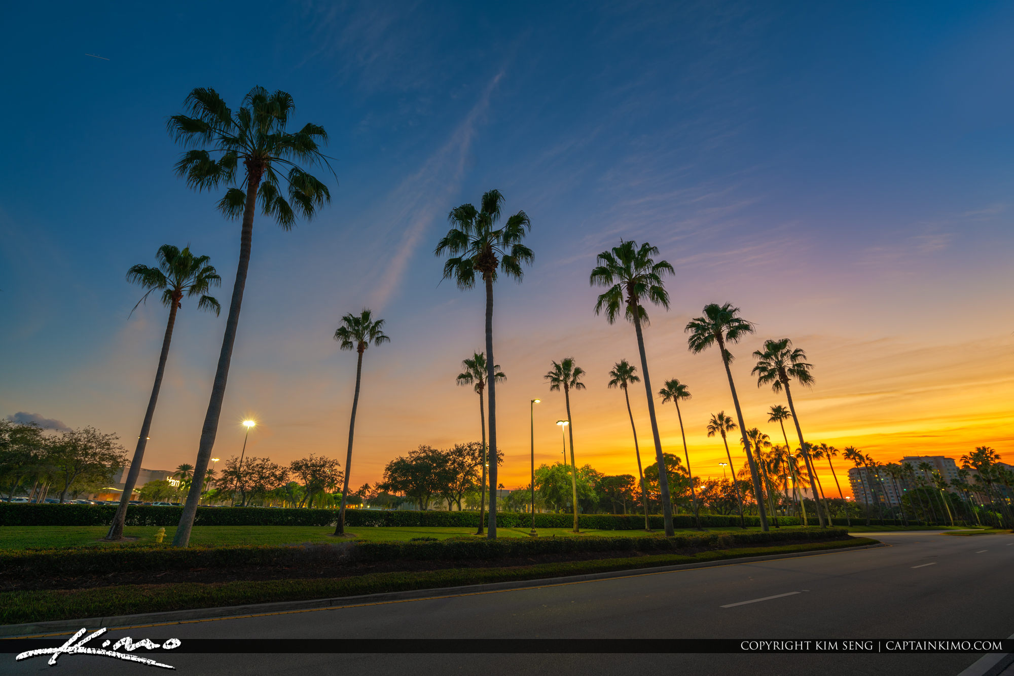 Palm Tree Sunset Road Gardens Parkway Florida