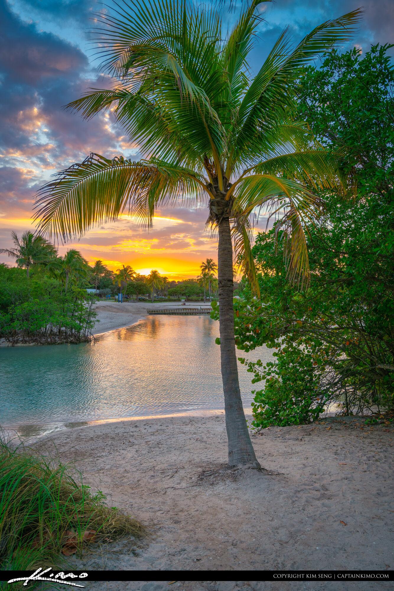 Coconut Tree Sunset Dubois Lagoon