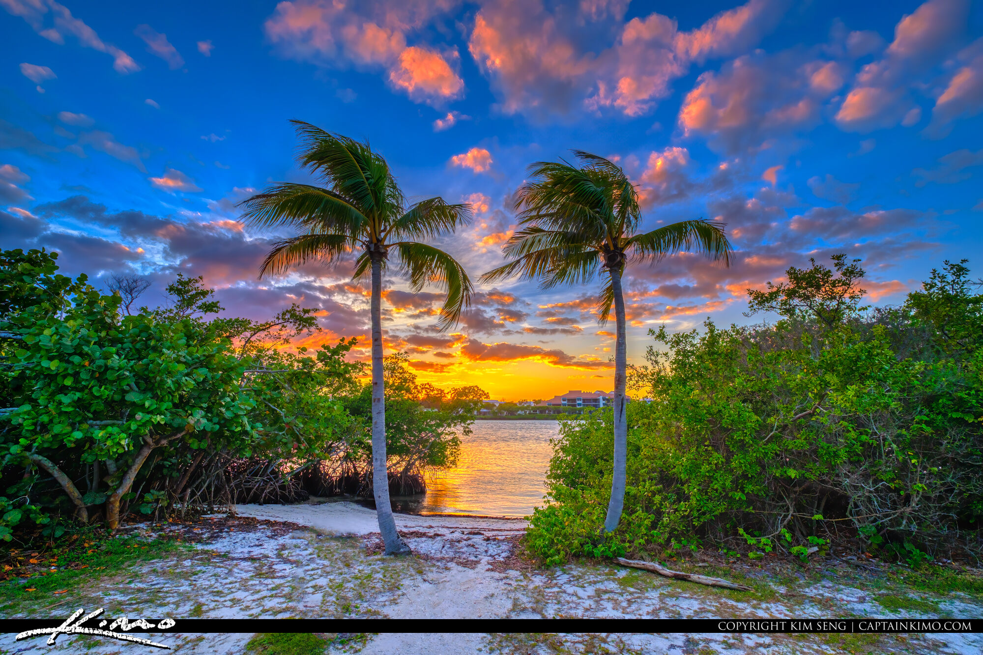 Loxahatchee River Jupiter Island Sunset Coconut Trees