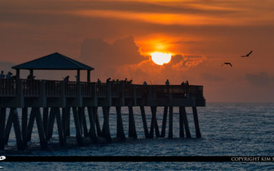 Juno Beach Pier Sunrise and Birds Atlantic Ocean