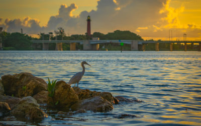 Egret Bird Morning Fishing Jupiter Lighthouse Waterway