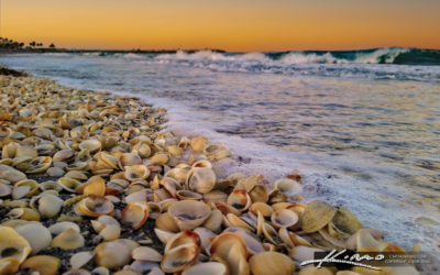 Seashells from Jupiter Inlet Florida Palm Beach County