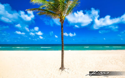 Coconut Palm Tree Sebastian Street Beach Fort Lauderdale