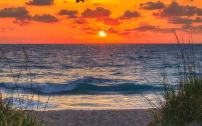 Jensen Beach Park Sunrise Ocean Wave Sand Dunes
